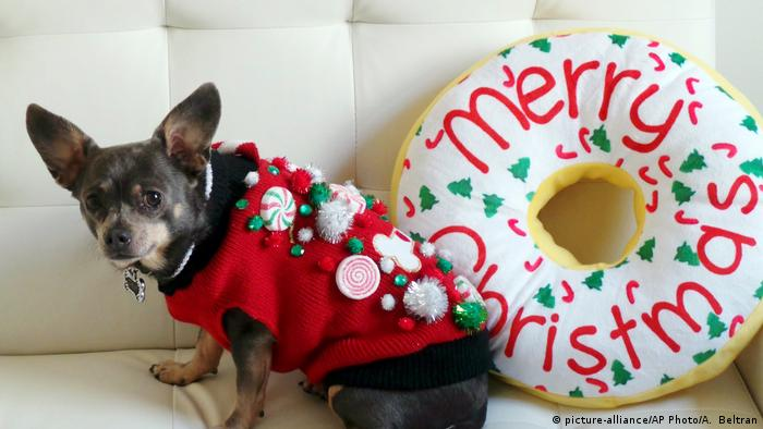 Закутати в светри можна не лише всю сім'ю, але й хатніх улюбленців. Традиція жахливого різдвяного светра не обмежується людьми - порадувати екстравагантним трикотажем можно і свого цуцика чи кицьку.