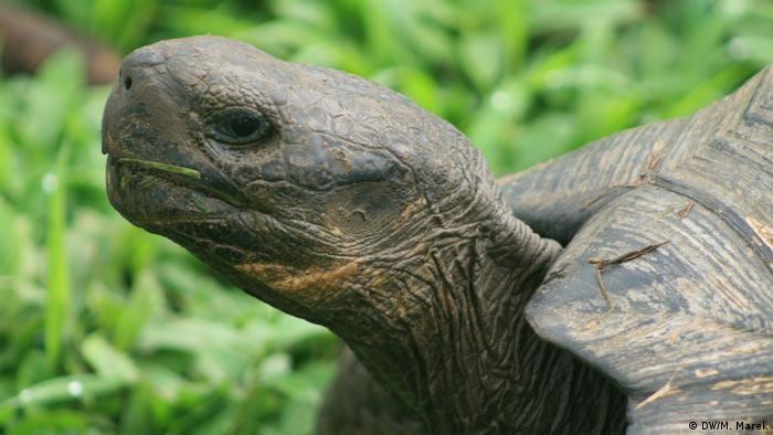 Galapagos giant tortoise (DW/M. Marek)