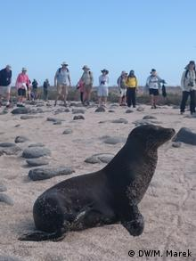 Galapagos - young sea lion (DW/M. Marek)