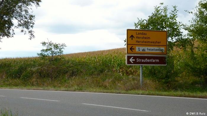 Ostrich Farm in Rülzheim (DW/I.B.Ruiz)