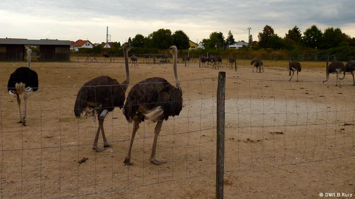 Ostrich Farm in Rülzheim