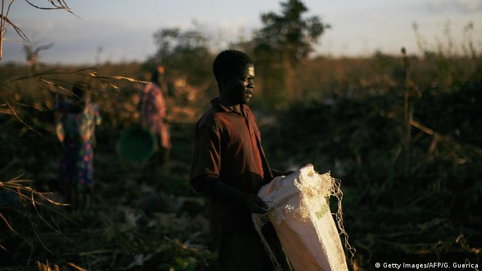A Malawian farm worker in a maize field (Getty Images/AFP/G. Guerica)