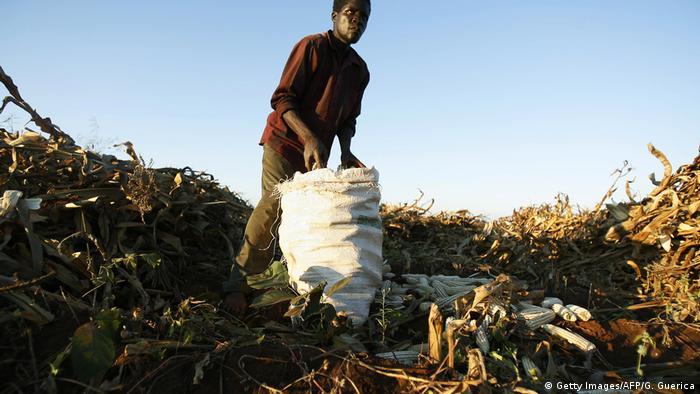 Südarika Landwirtschaft (Getty Images/AFP/G. Guerica)