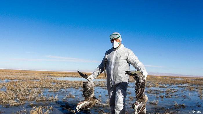 Iran Vogelgrippe (Isna)