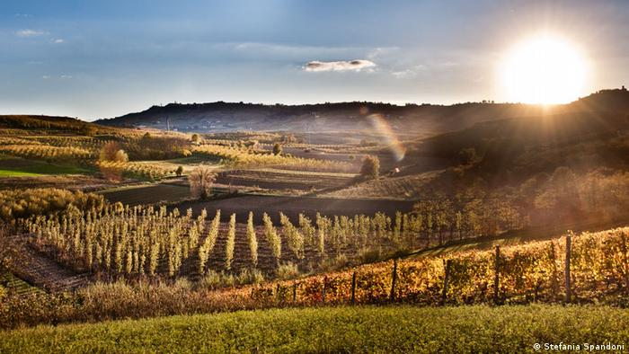 Vineyard landscape of Langhe and Roero in northwestern Italy (Stefania Spandoni)