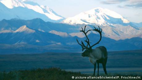 Υπάρχουν πολλά είδη ταράνδων, τα οποία κατατάσσονται σε δύο κατηογρίες: μία από αυτές ζει στις τούνδρες και η άλλη στα δάση. Ο βορειοαμερικάνικος τάρανδος ονομάζεται Καριμπού και ζει στην Αλάσκα, τον Καναδά και την Γροιλανδία.