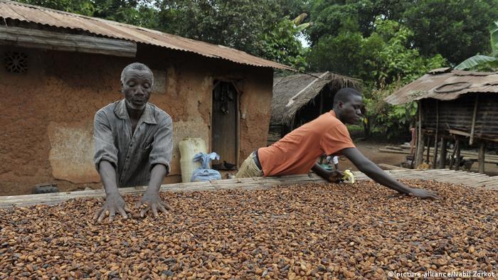 Elfenbeinküste Kakao-Anbau (picture-alliance/Nabil Zorkot)