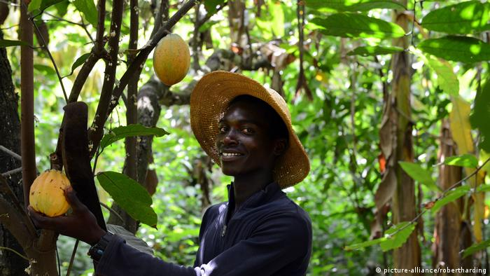 Ghana Kakao-Anbau