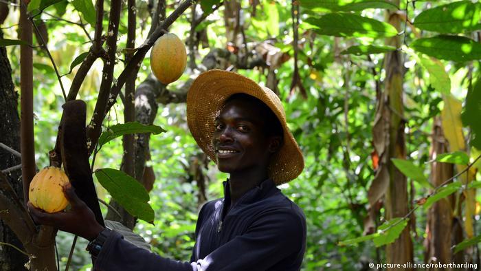 Ghana Kakao-Anbau (picture-alliance/robertharding)
