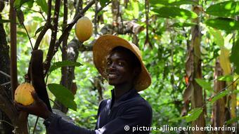 Pour certains producteurs de cacao, le travail des enfants dans les exploitations est juste un apprentissage
