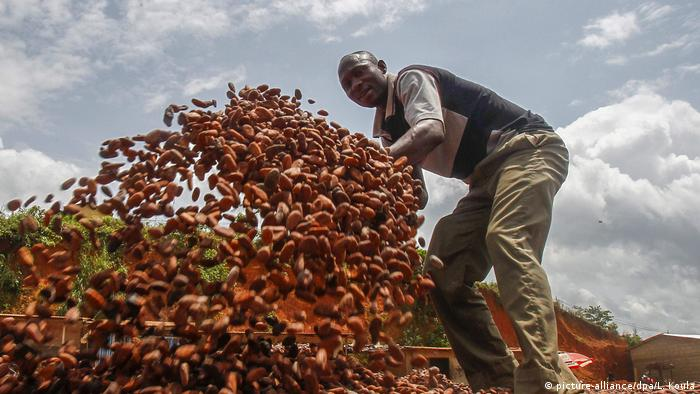 A farmer works with cacao beans at a farm in Ivory Coast (picture-alliance/dpa/L. Koula)