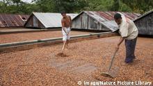 Brasilien Kakao-Anbau in Ilheus