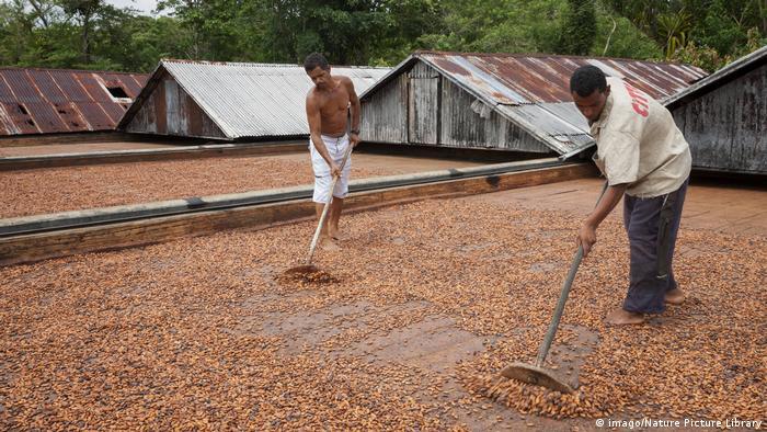 Brasilien Kakao-Anbau in Ilheus (imago/Nature Picture Library)
