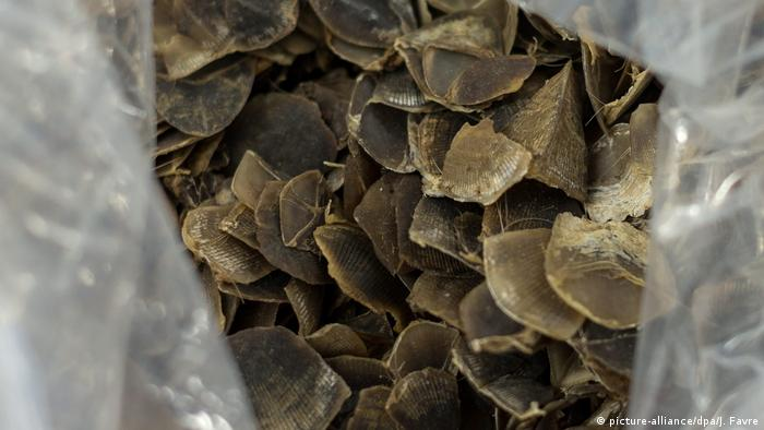 Photo: Pangolin scales (Source: picture-alliance/dpa/J. Favre)