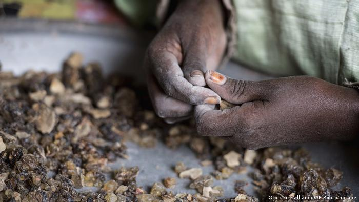 Frankincense harvesters in Somaliland (picture-alliance/AP Photo/hotabe)