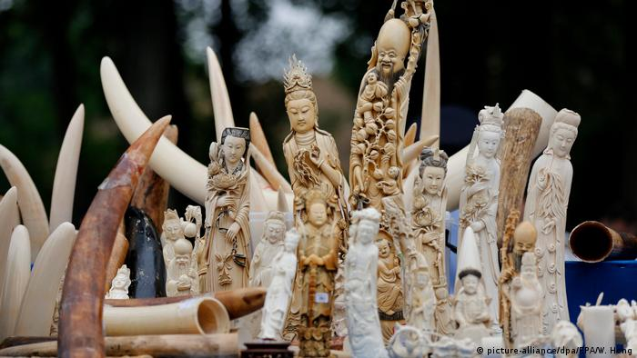 Ivory figures and tusks
