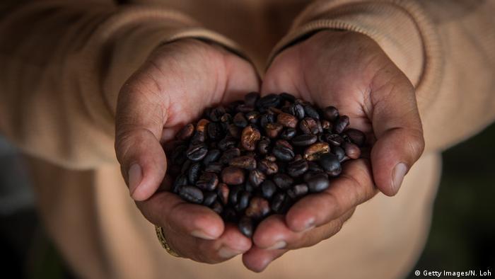 Foto ilustrasi biji kopi asal Indonesia