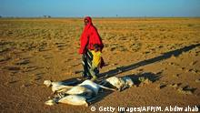 December 15, 2016. - A woman and a boy walk past a flock of dead goats in a dry land close to Dhahar in Puntland, northeastern Somalia, on December 15, 2016. Drought in the region has severely affected livestock for local herdsmen. / AFP / MOHAMED ABDIWAHAB