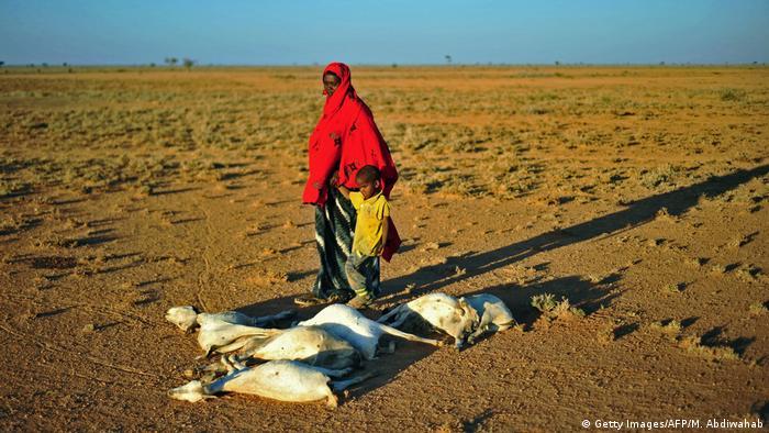 Mulher e criança passam por rebanho de cabras mortas em deserto na Somália