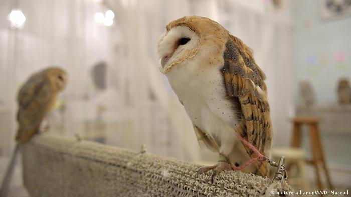 Want To Pet That Cute Owl Think Again