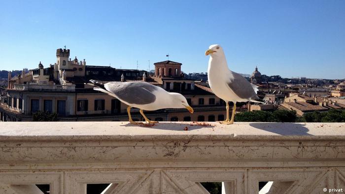 Die Vögel des Himmels: sie säen nicht, sie ernten nicht, Gott ernährt sie trotzdem. Foto: privat