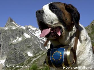 A St. Bernhard dog with a first aid barrel of liquor around his neck that has an EU flag on it