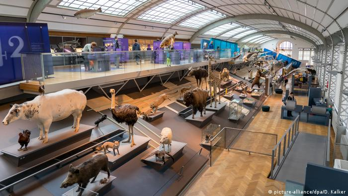 Belgien Brüssel - Museum für Naturwissenschaften (picture-alliance/dpa/D. Kalker)