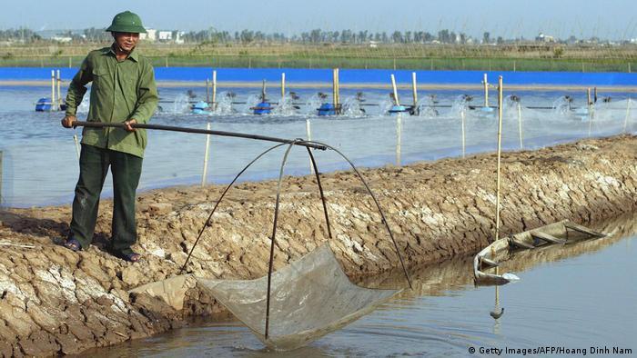Vietnam - Farmer Fischt Shrimps