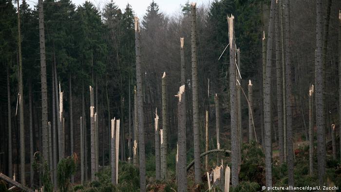 Orkan Kyrill Umgeknickte Bäume