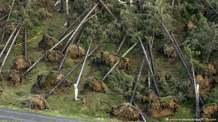 Orkan Kyrill Sturmschäden im Siegerland