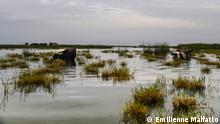 Irak Sumpflandschaft nahe Chibayish
