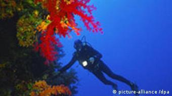 Ein Taucher bewundert die Unterwasserlandschaft im Roten Meer.