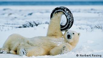 DW euromaxx Eisbär