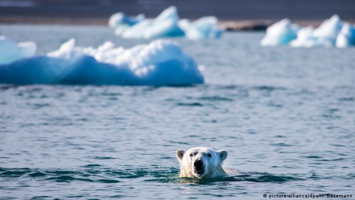 Polar bear swimming (picture-alliance/dpa/H. Bäsemann)