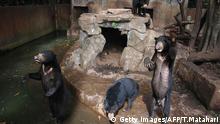 Zoo Bären Indonesien (Getty Images/AFP/T.Matahari)