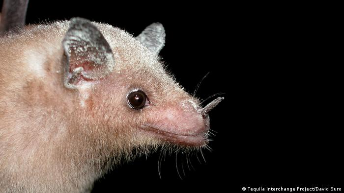 A close up of a tequila bat