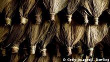 Indonesien Zigarrenproduktion Tabak (Getty Images/K. Dowling)
