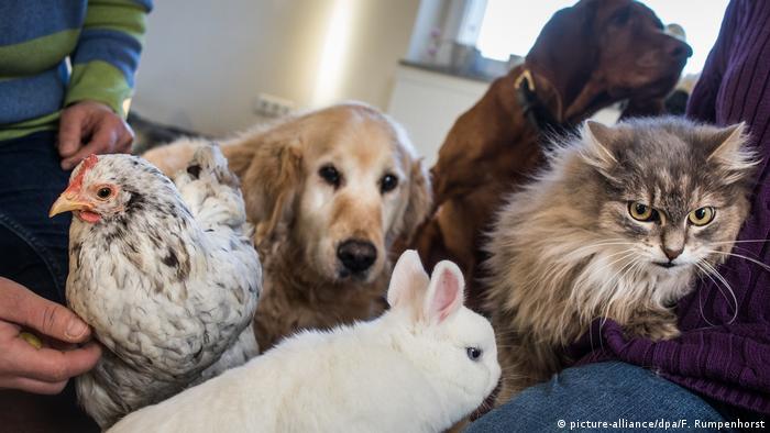 حيوانات منزلية أليفة (صورة من الأرشيف)