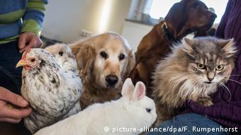 Домашние животные в Германии: до трех лет лишения свободы за жестокое обращение