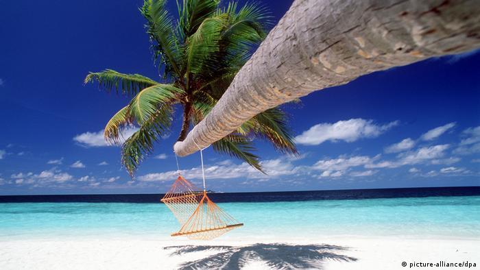棕榈树下的异国情调 远程旅游成时尚