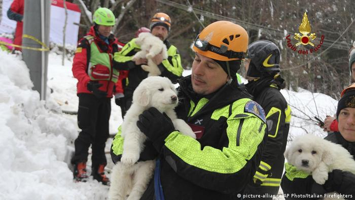 Puppies with rescue workers at the site of the avalanche