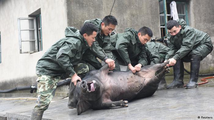 Chinesisches Neujahrsfest 2017 Schwein zum Schlachten in Hangzhou (Reuters)
