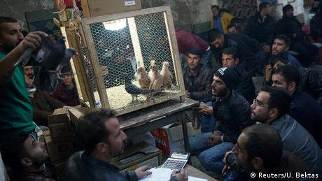 Türkei Auktion von Tauben in Sanliurfa (Reuters/U. Bektas)