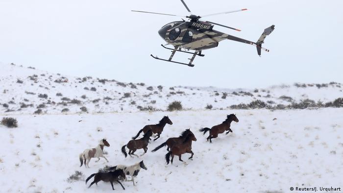 USA Wildpferde im Bundesstaat Utah (Reuters/J. Urquhart)