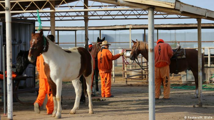 USA Arizona Häftlinge Wildpferde (Reuters/M. Blake)