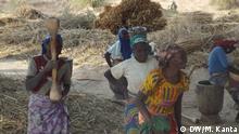 Niger Zinder - Arbeit auf dem Land