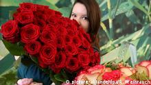 +++ Bildergalerie Das erwartet uns im Februar +++ Rosen zum Valentinstag dekoriert am 12.02.2015 im Blumenladen Stockrahm in Moers (Nordrhein-Westfalen) Floristin Janine. Der Valentinstag (14. Februar) gilt als Tag der Liebenden und ein Symbol des Tages sind Blumen. Foto: Roland Weihrauch/dpa | Verwendung weltweit