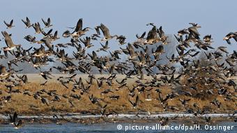 Αποδημητικά πουλιά πετούν κάθε χρόνο από την κεντρική Ευρώπη προς τη Μεσόγειο και ειδικότερα την Κύπρο