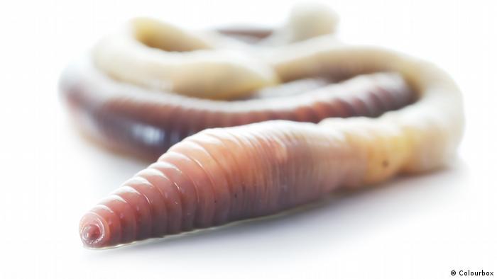 Regenwürmer (Colourbox)