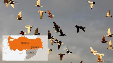 Bild-Kombi für Bildergalerie zu Grenzen Grenzstädte ENG